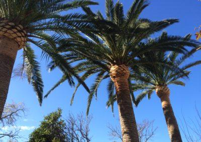 Tala y poda de árboles y palmeras